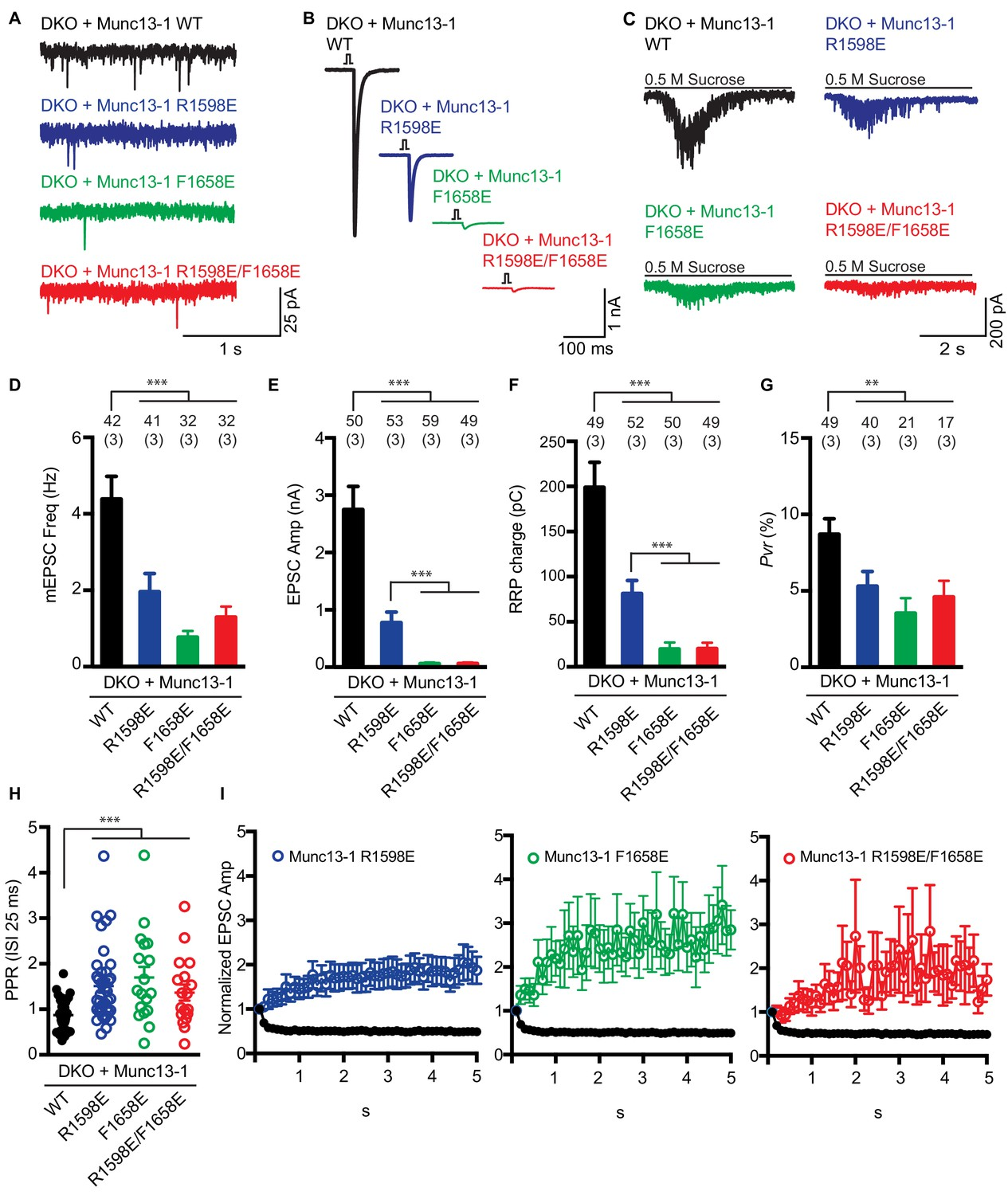 Membrane bridging by Munc13-1 is crucial for