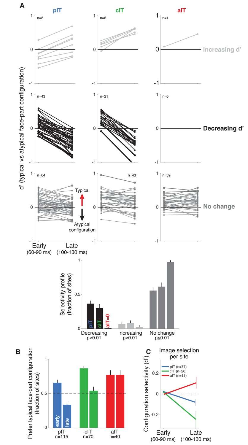 Neural dynamics at successive stages of the ventral visual stream