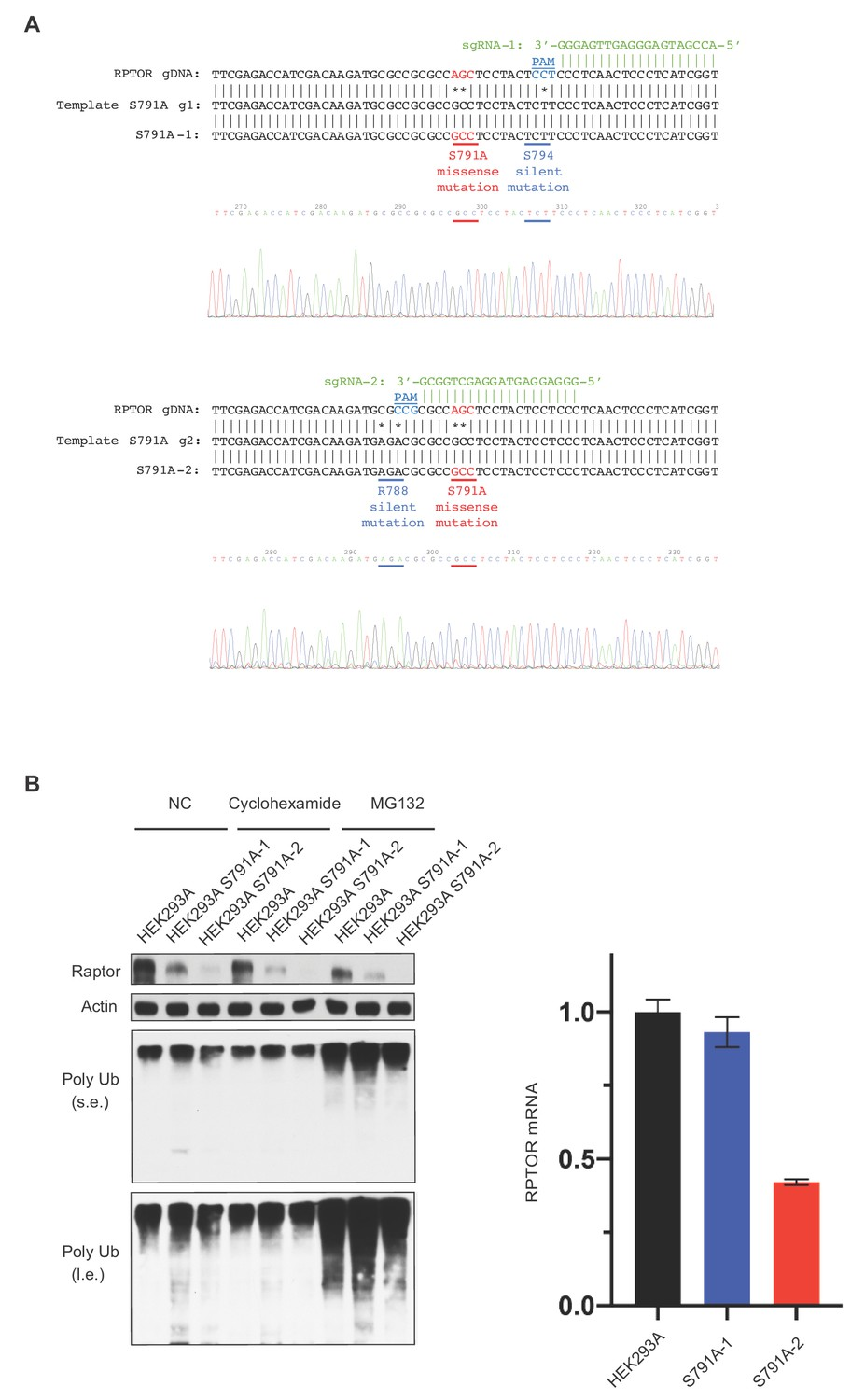 GPCR signaling inhibits mTORC1 via PKA phosphorylation of Raptor | eLife