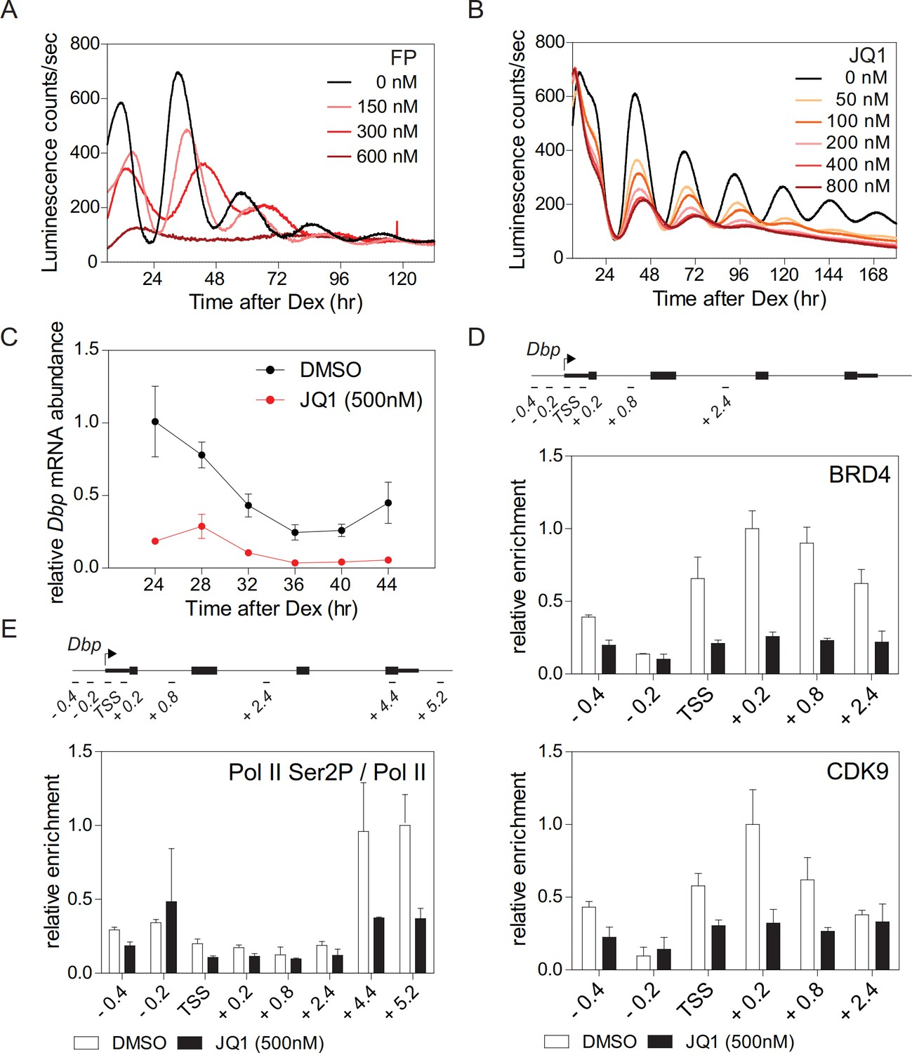 Acetylation of BMAL1 by TIP60 controls BRD4-P-TEFb