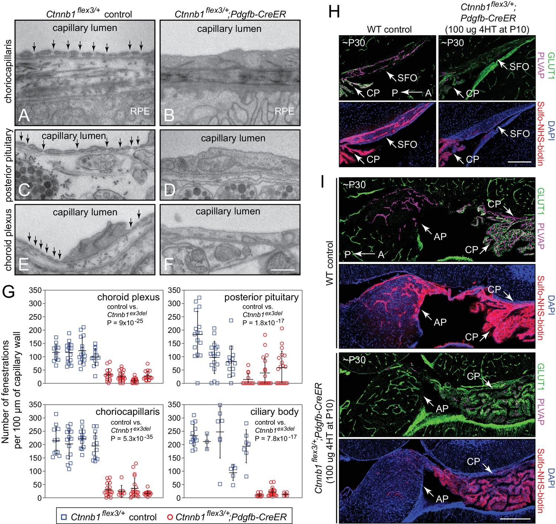 Beta Catenin Signaling Regulates Barrier Specific Gene