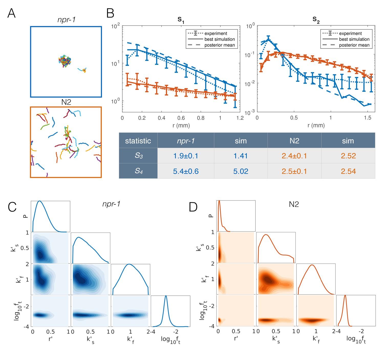 Shared behavioral mechanisms underlie C  elegans aggregation