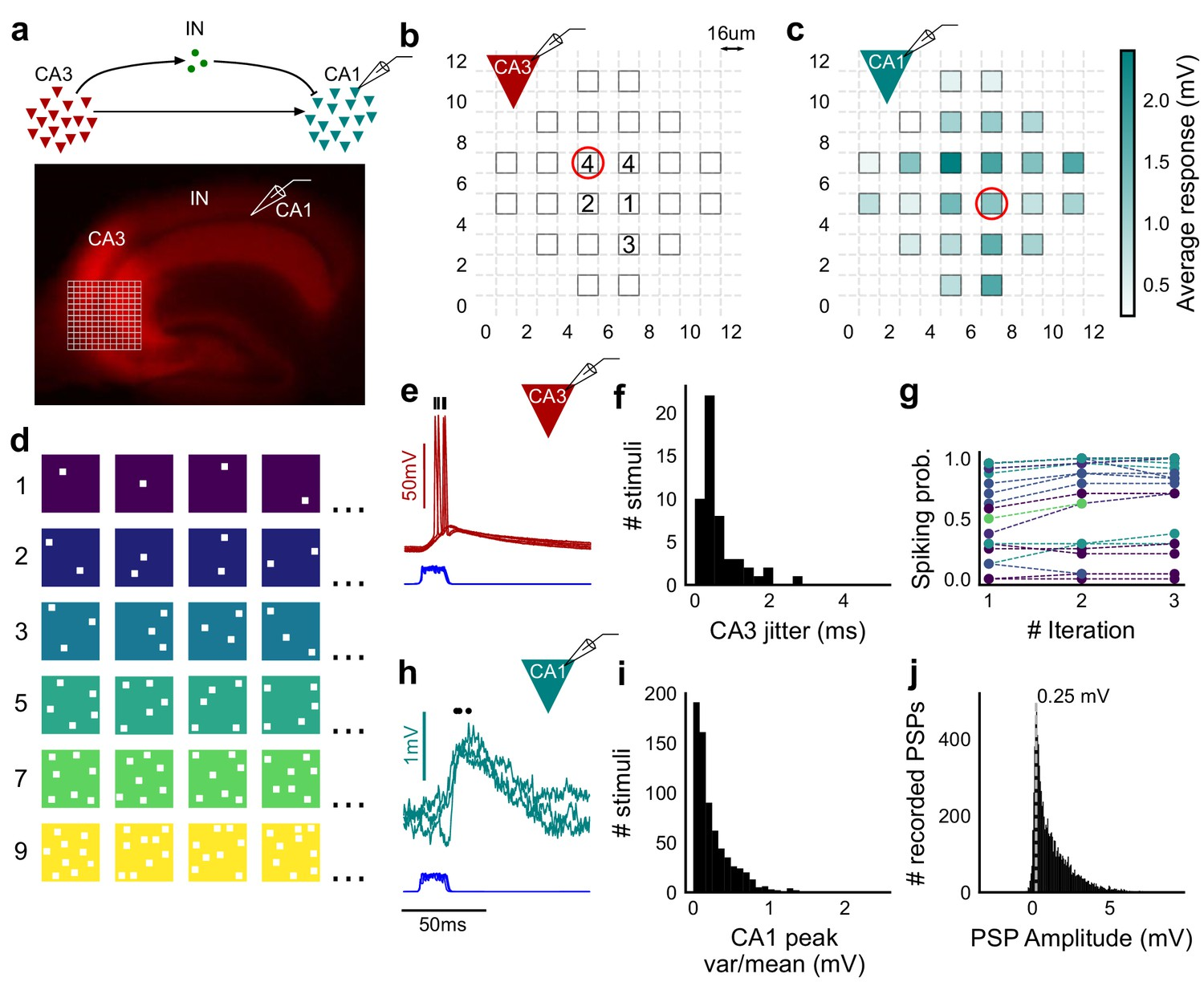 Precise excitation-inhibition balance controls gain and timing in