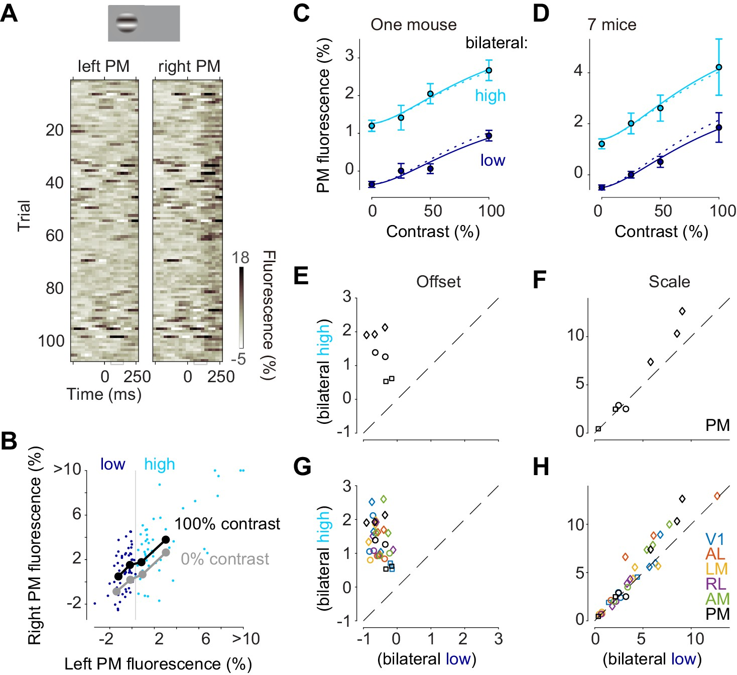 The impact of bilateral ongoing activity on evoked responses