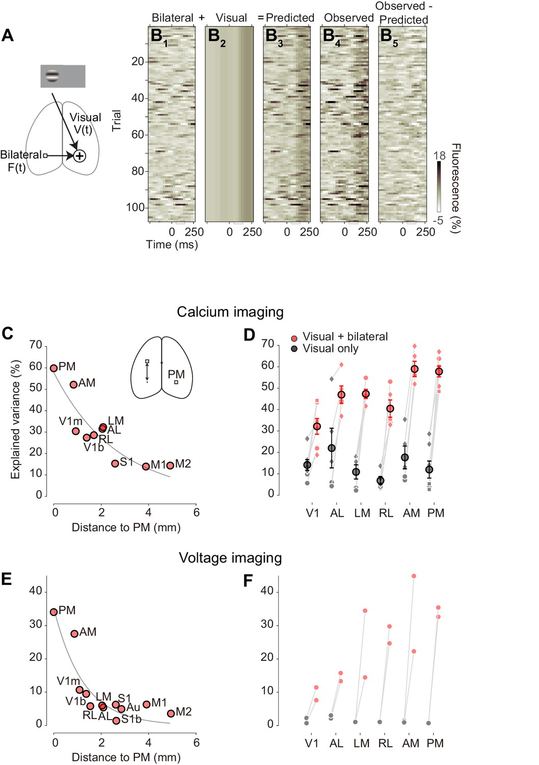 The impact of bilateral ongoing activity on evoked responses in