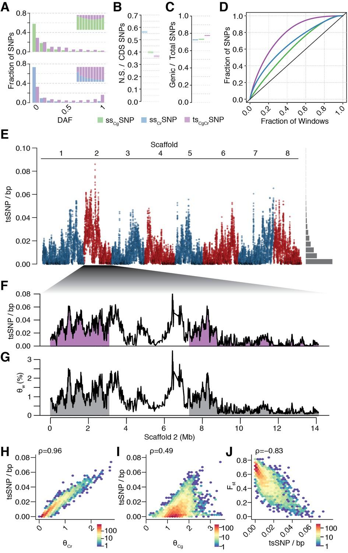 Long-term balancing selection drives evolution of immunity
