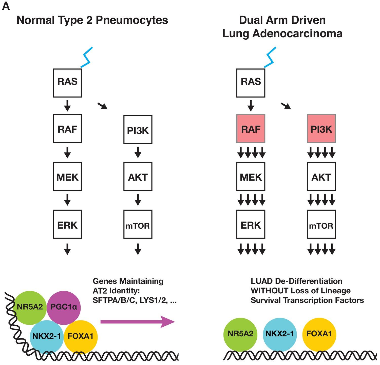 diabetes de glicosilación aqp5