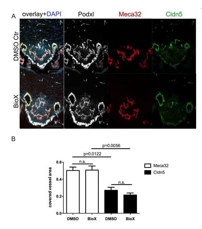 Low wnt/β-catenin signaling determines leaky vessels in the