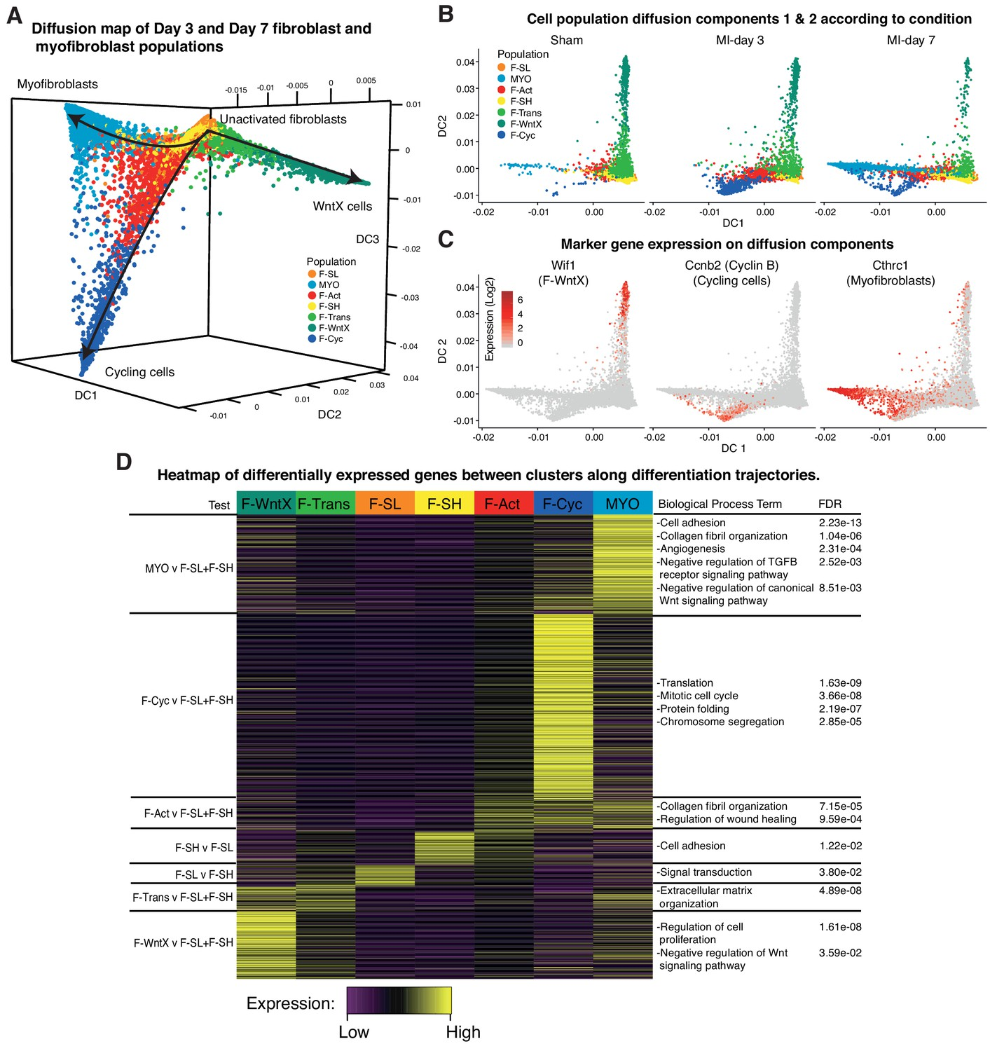 Single-cell expression profiling reveals dynamic flux of cardiac