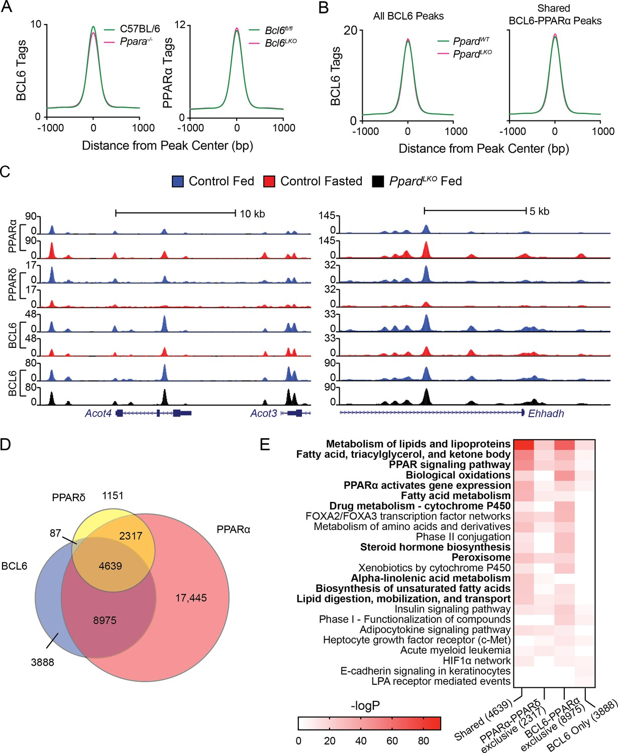 Dynamic Repression By BCL6 Controls The Genome-wide Liver