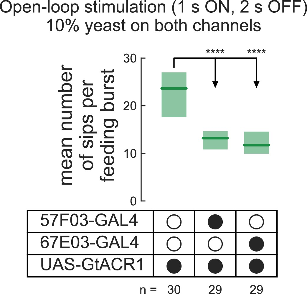 optoPAD, a closed-loop optogenetics system to study the circuit