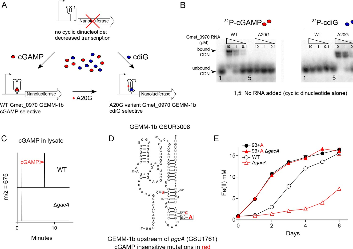 Structure and mechanism of a Hypr GGDEF enzyme that activates cGAMP