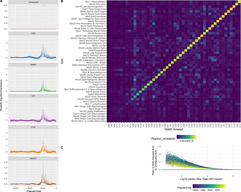 Unified single-cell analysis of testis gene regulation and pathology