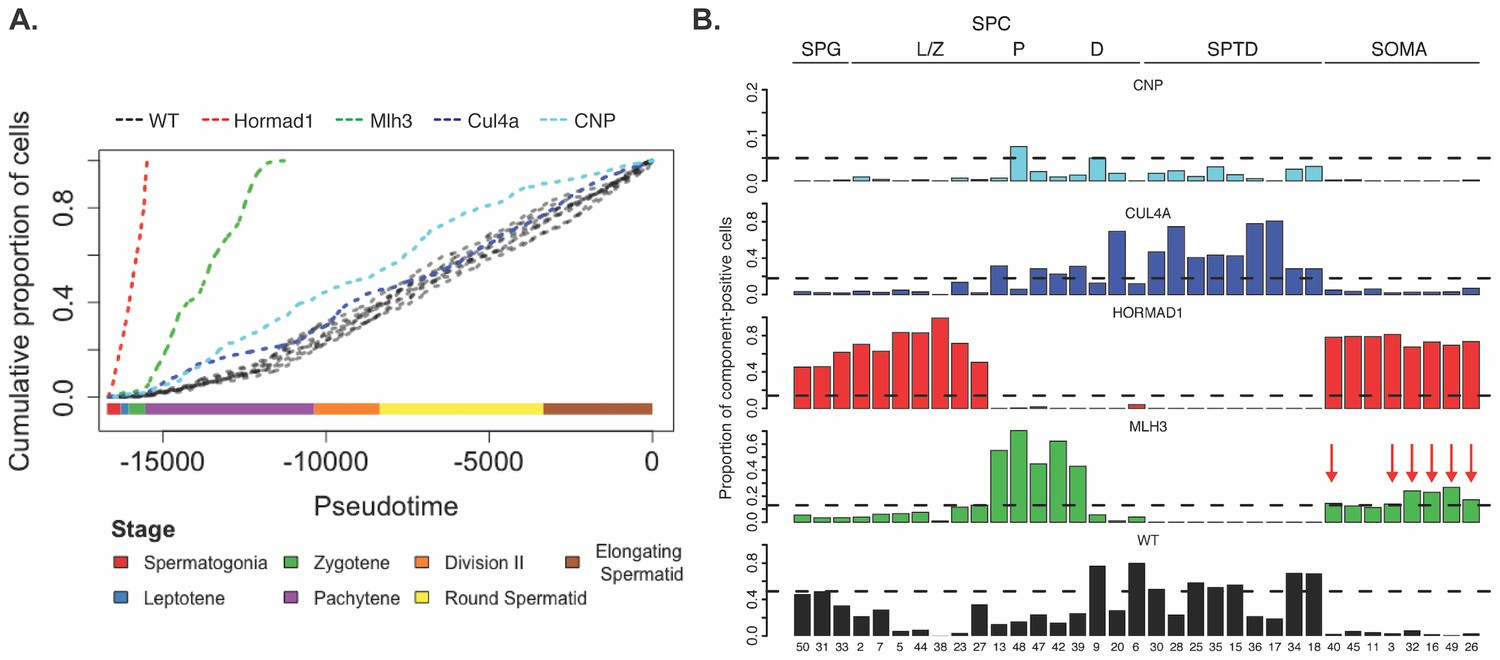 Unified single-cell analysis of testis gene regulation and