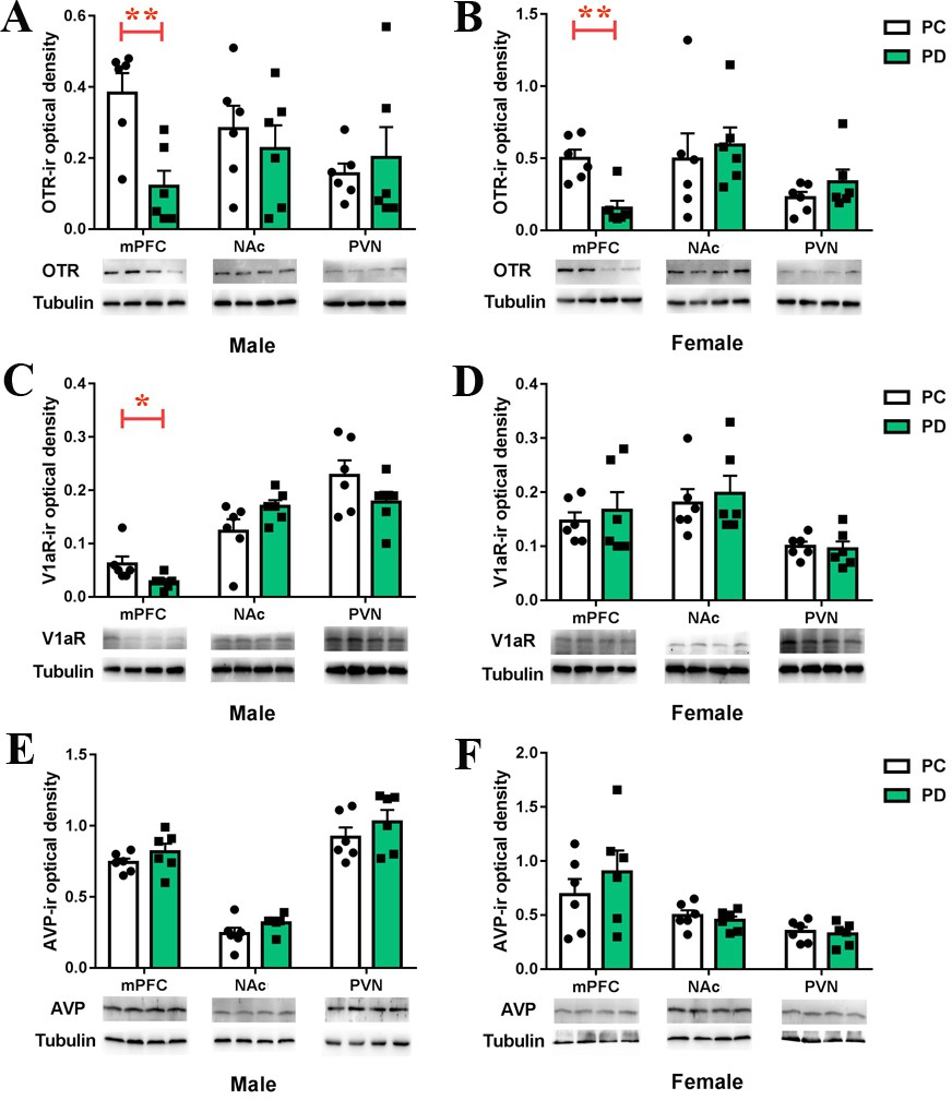 Treatment Restores Sociability In >> Increased Anxiety And Decreased Sociability Induced By Paternal
