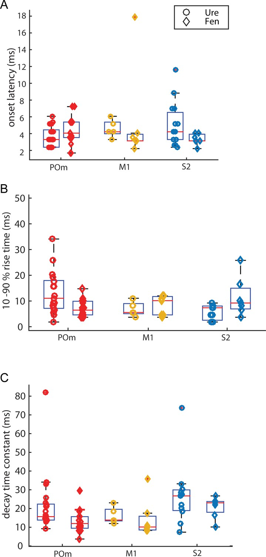 High-order thalamic inputs to primary somatosensory cortex
