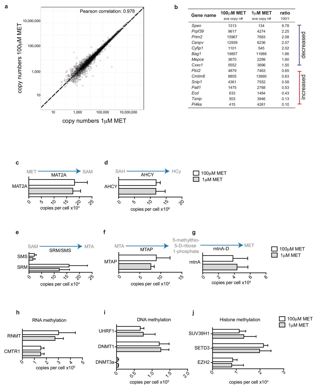 Antigen receptor control of methionine metabolism in T cells | eLife