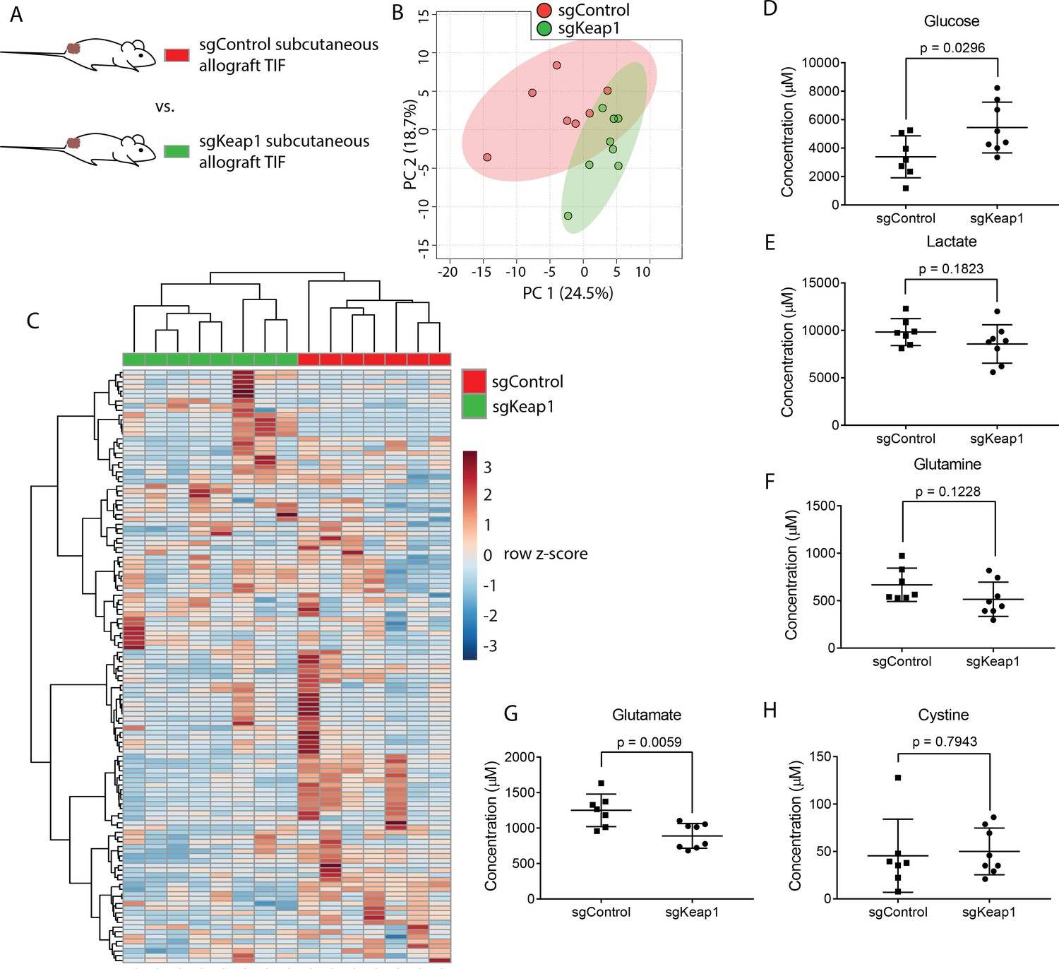 Quantification of microenvironmental metabolites in murine cancers