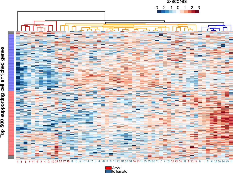 Transcriptomic and epigenetic regulation of hair cell regeneration