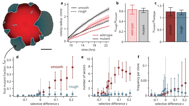 Environmental heterogeneity can tip the population genetics of range