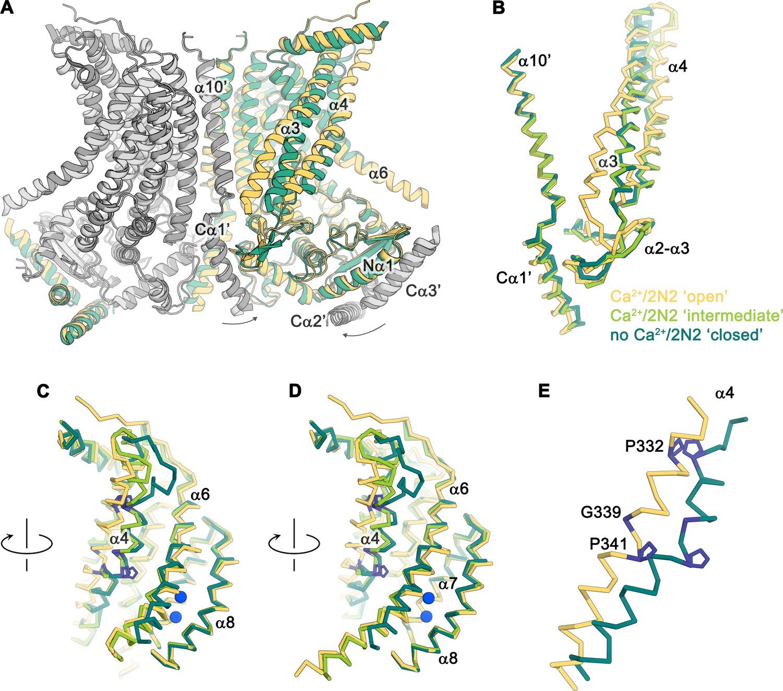 Stepwise Activation Mechanism Of The Scramblase Nhtmem16 Revealed