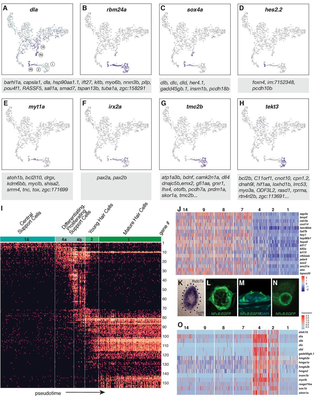 scRNA-Seq reveals distinct stem cell populations that drive