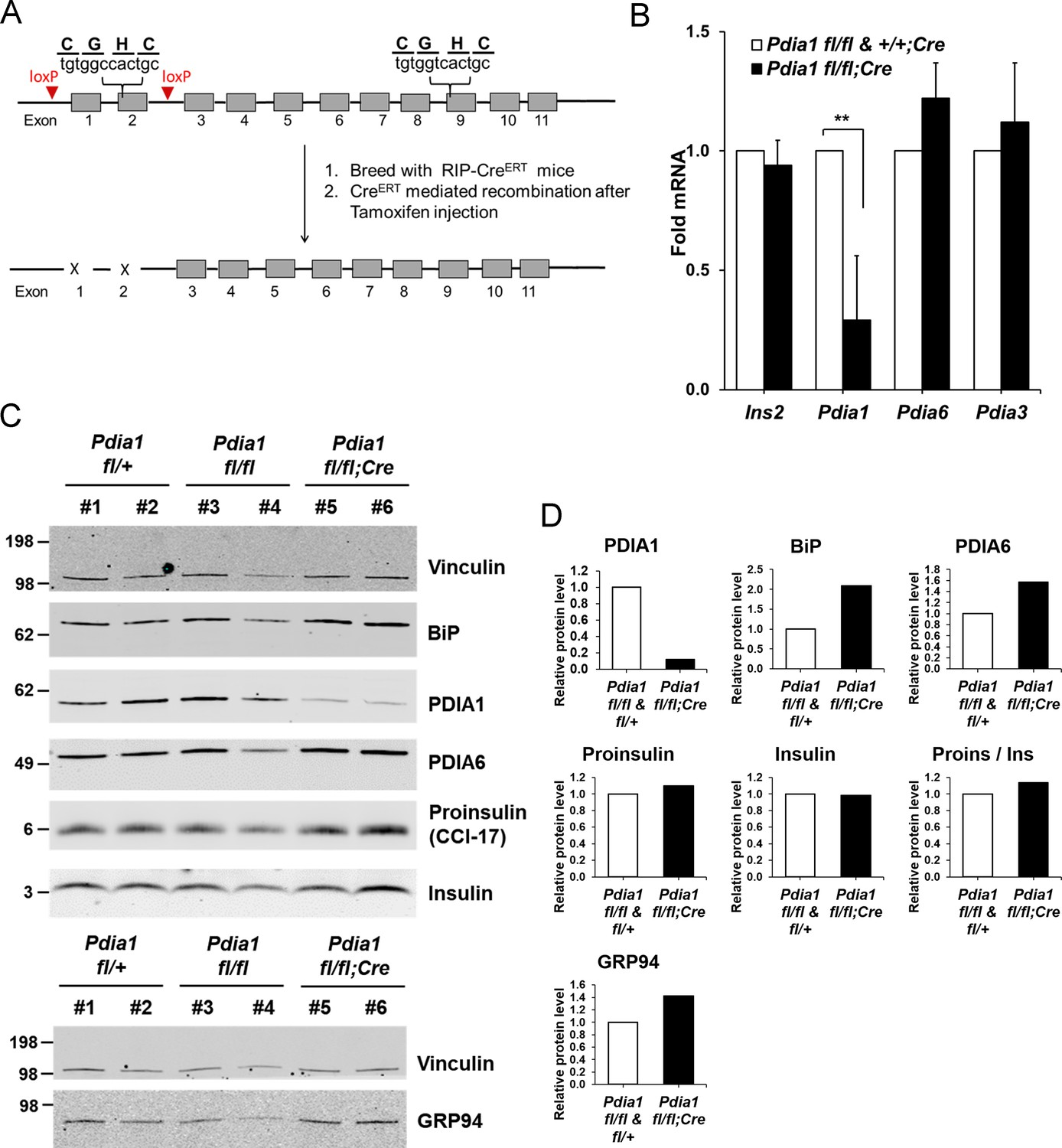 PDIA1/P4HB is required for efficient proinsulin maturation