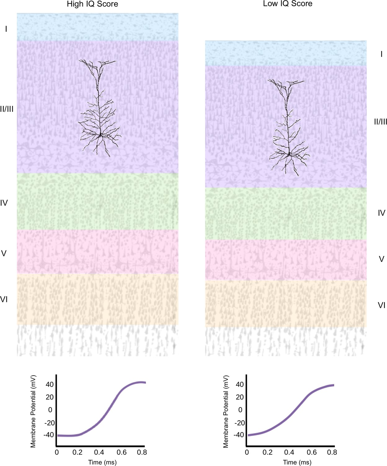 Human Intelligence: What single neurons can tell us | eLife