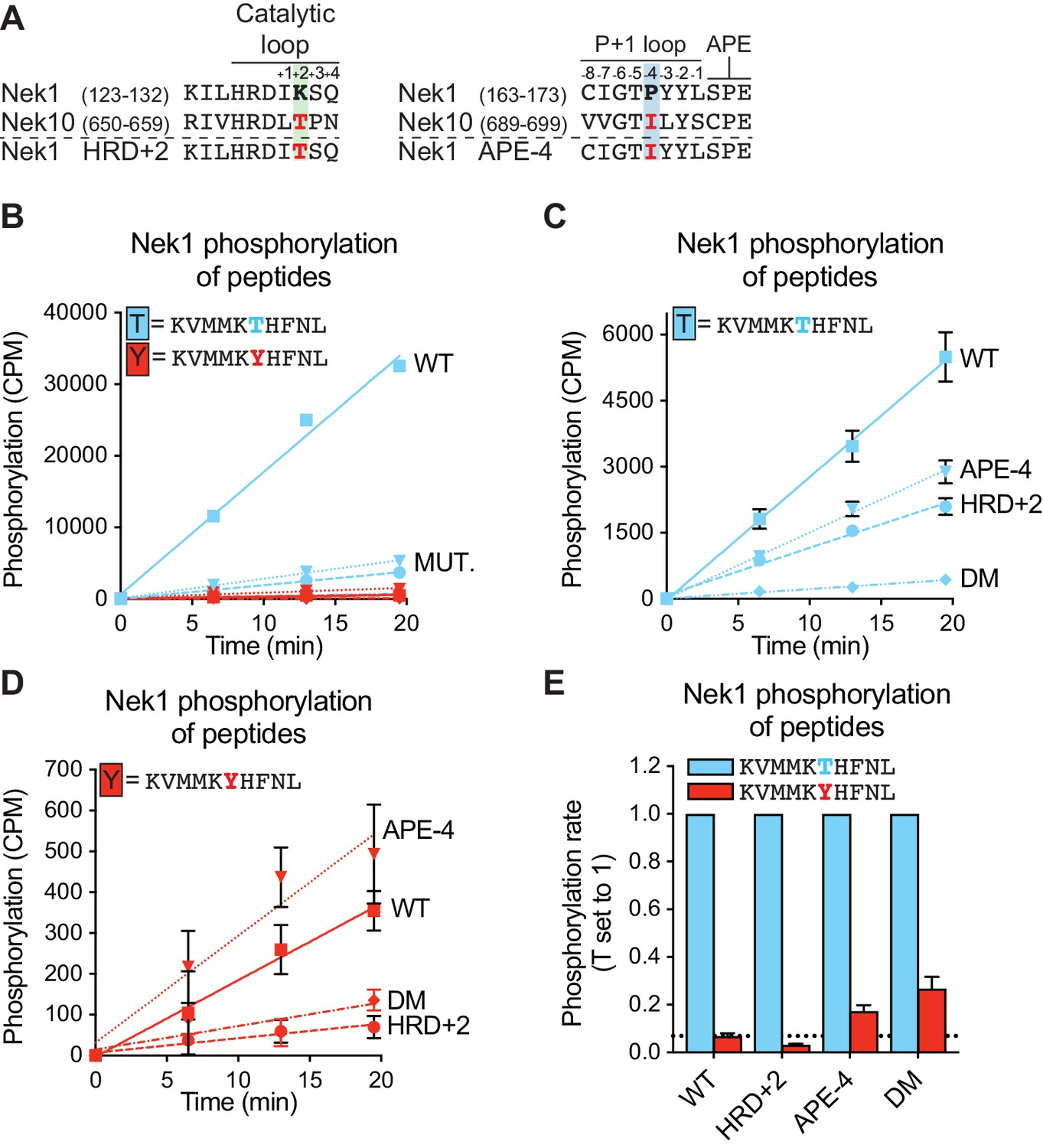 Comprehensive substrate specificity profiling of the human