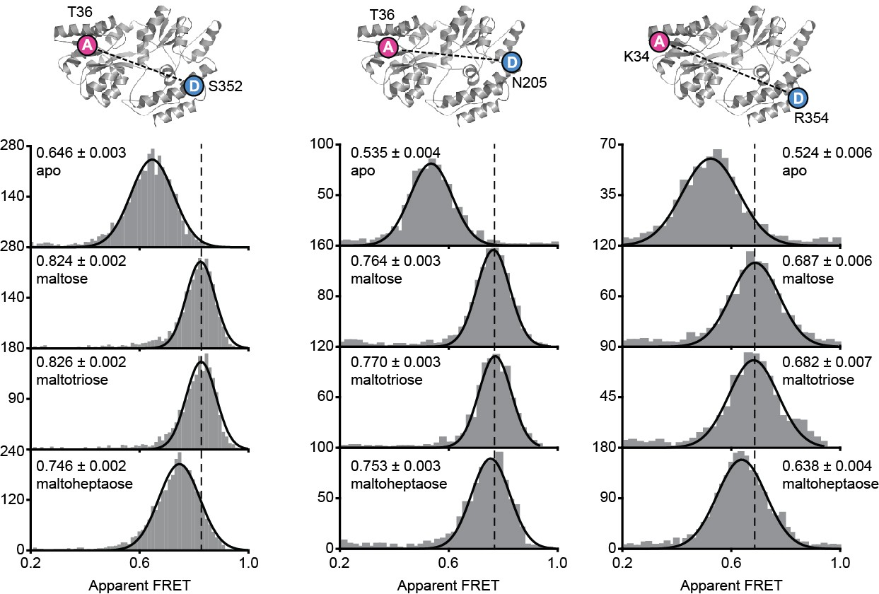 Conformational and dynamic plasticity in substrate-binding