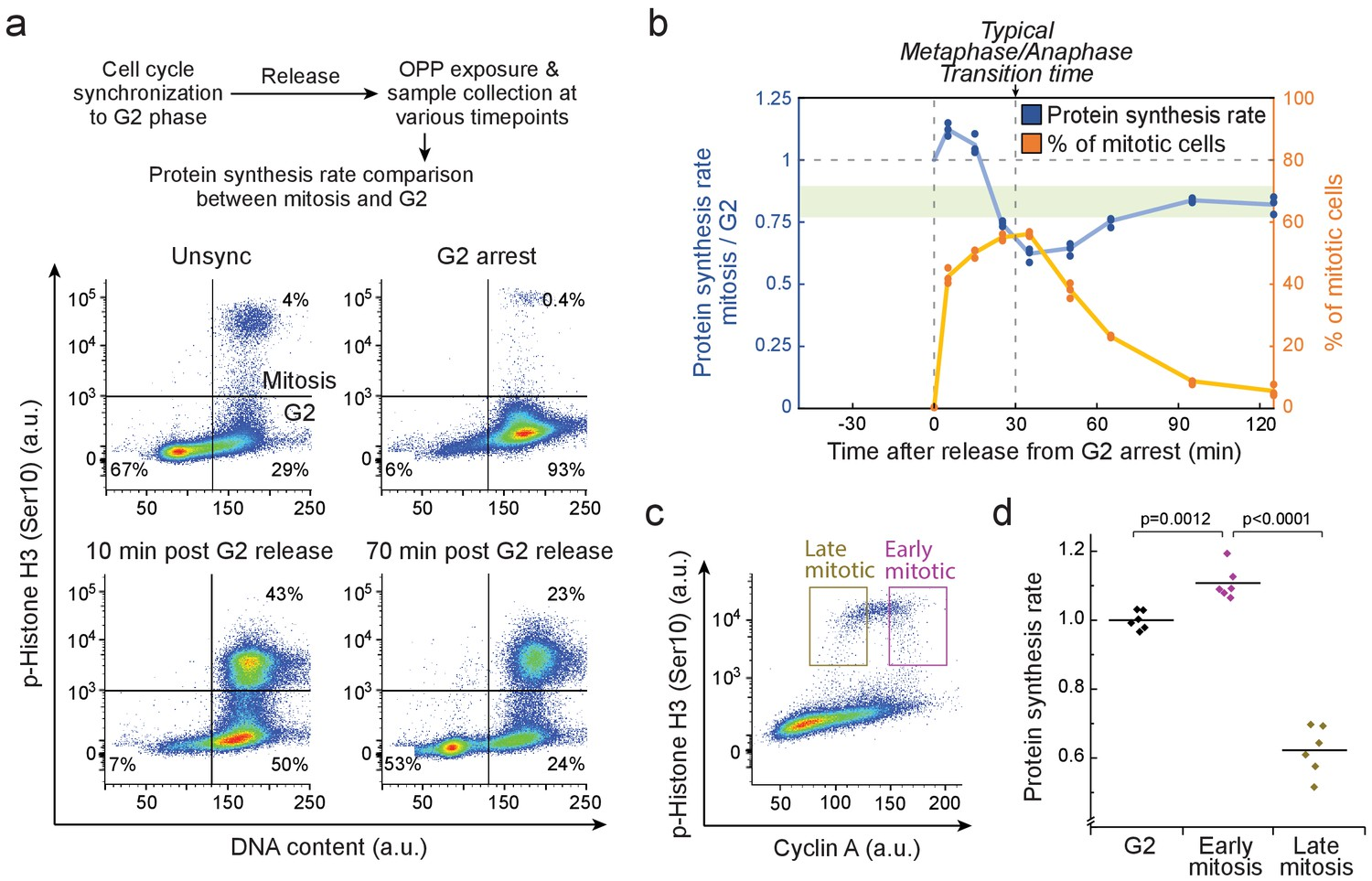 Mammalian cell growth dynamics in mitosis | eLife