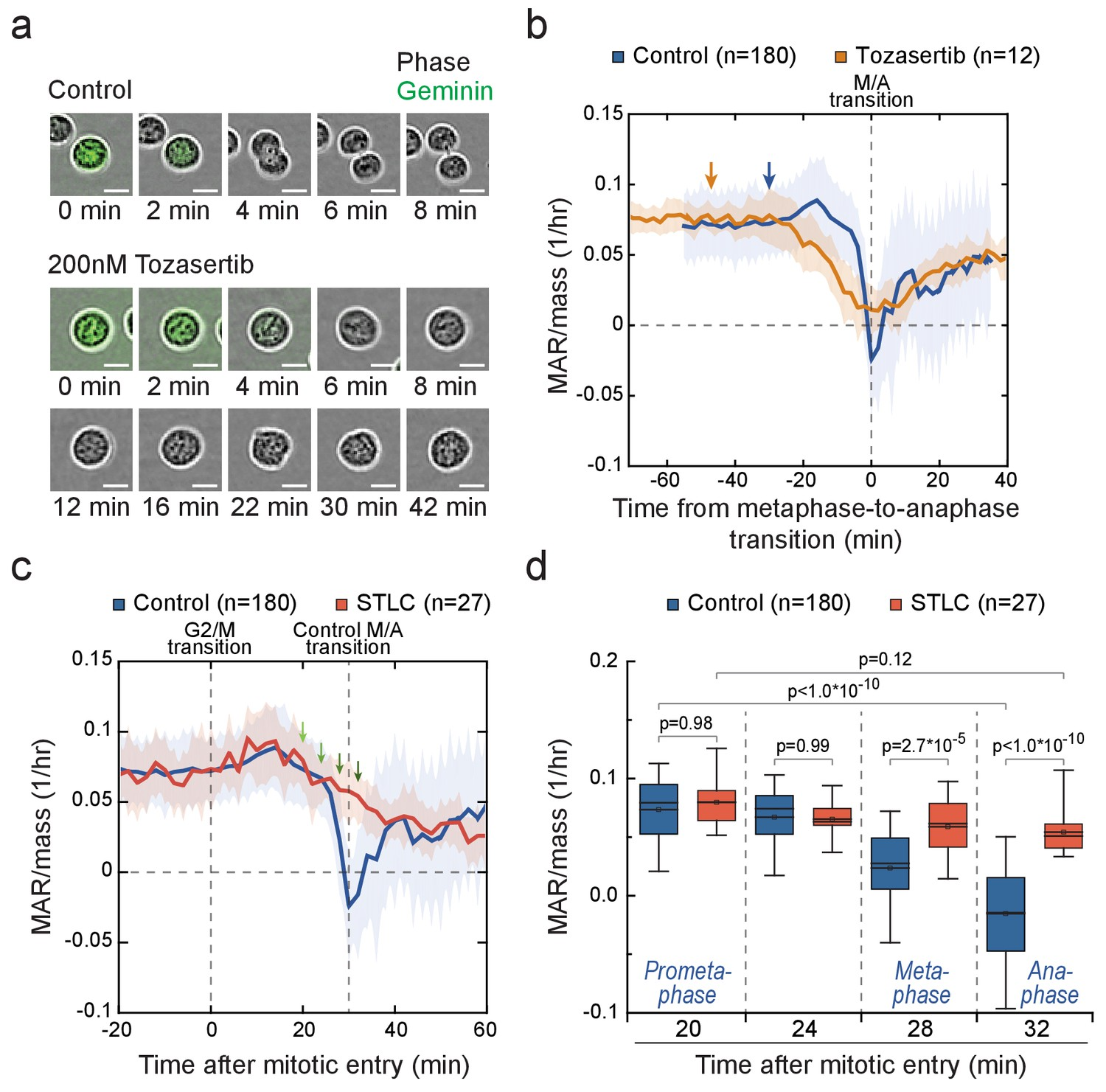 Figures and data in Mammalian cell growth dynamics in