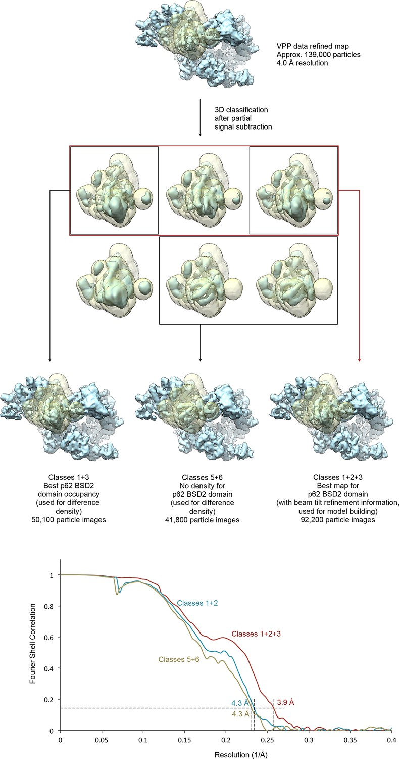 The complete structure of the human TFIIH core complex | eLife