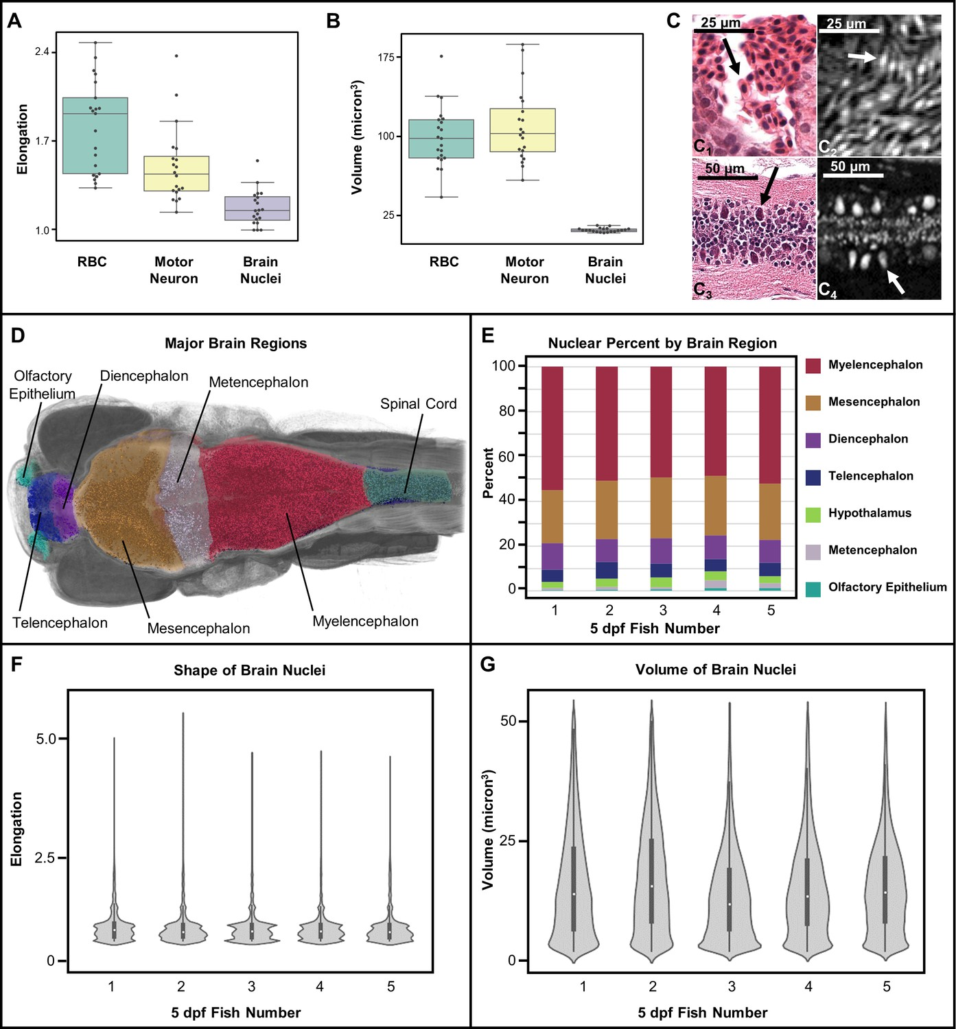 Computational 3D histological phenotyping of whole zebrafish