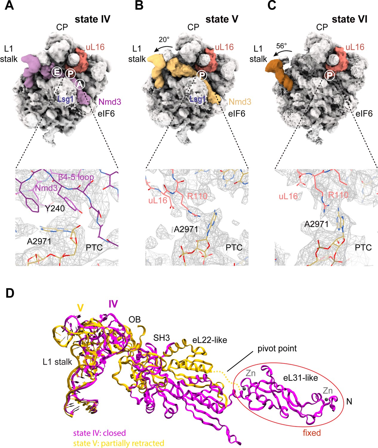 Mechanism of completion of peptidyltransferase centre