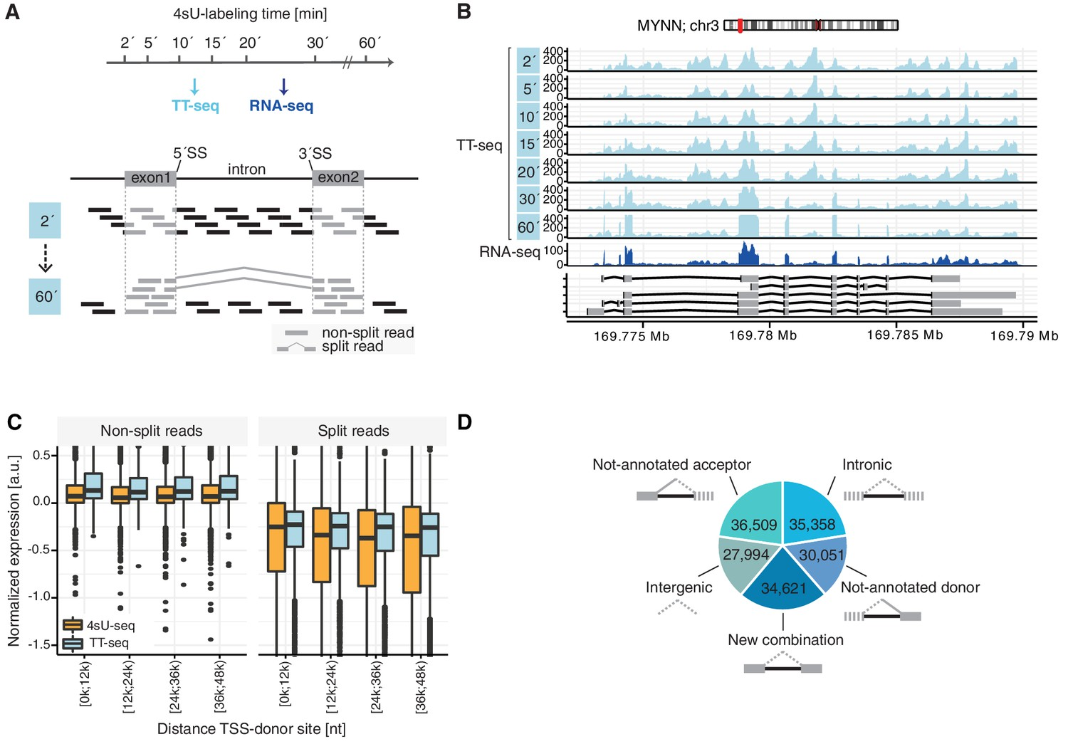 Global donor and acceptor splicing site kinetics in human cells | eLife