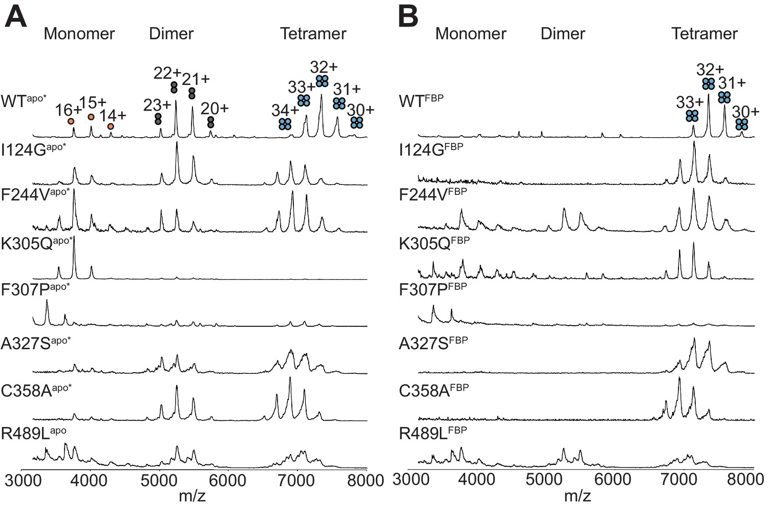 Functional cross-talk between allosteric effects of