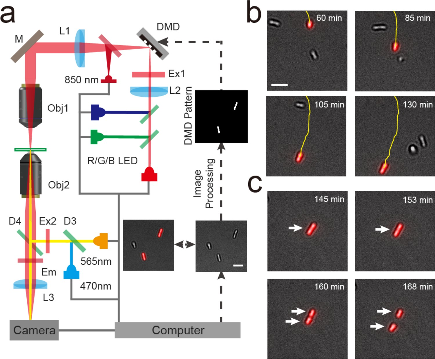 Heterogeneity in surface sensing suggests a division of labor in
