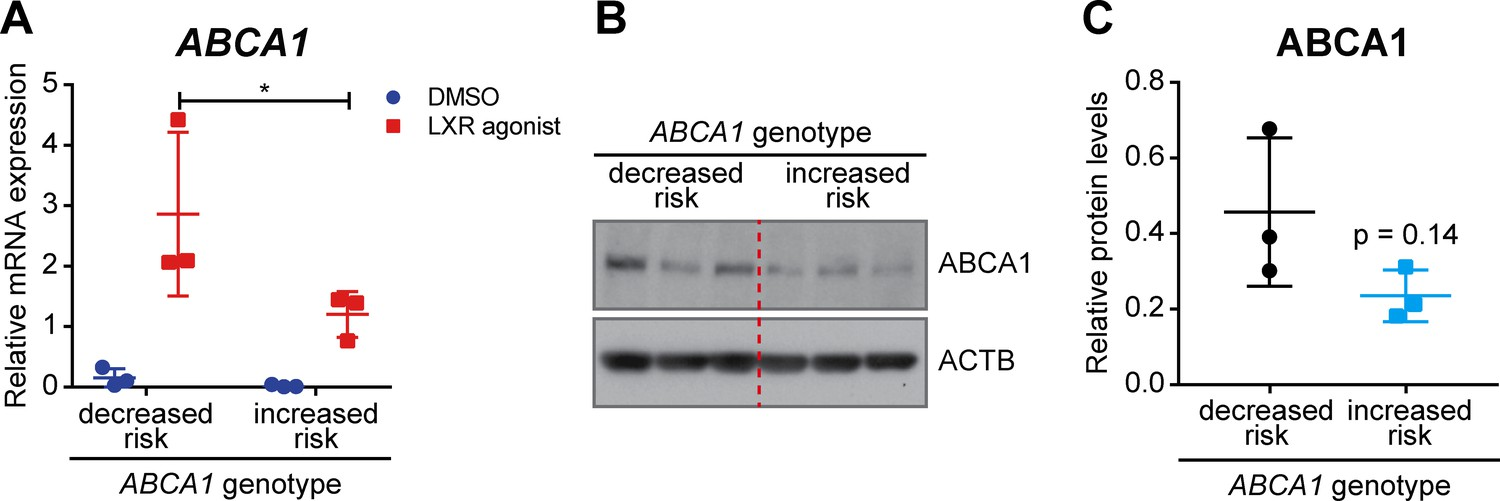 Impaired ABCA1/ABCG1-mediated lipid efflux in the mouse retinal