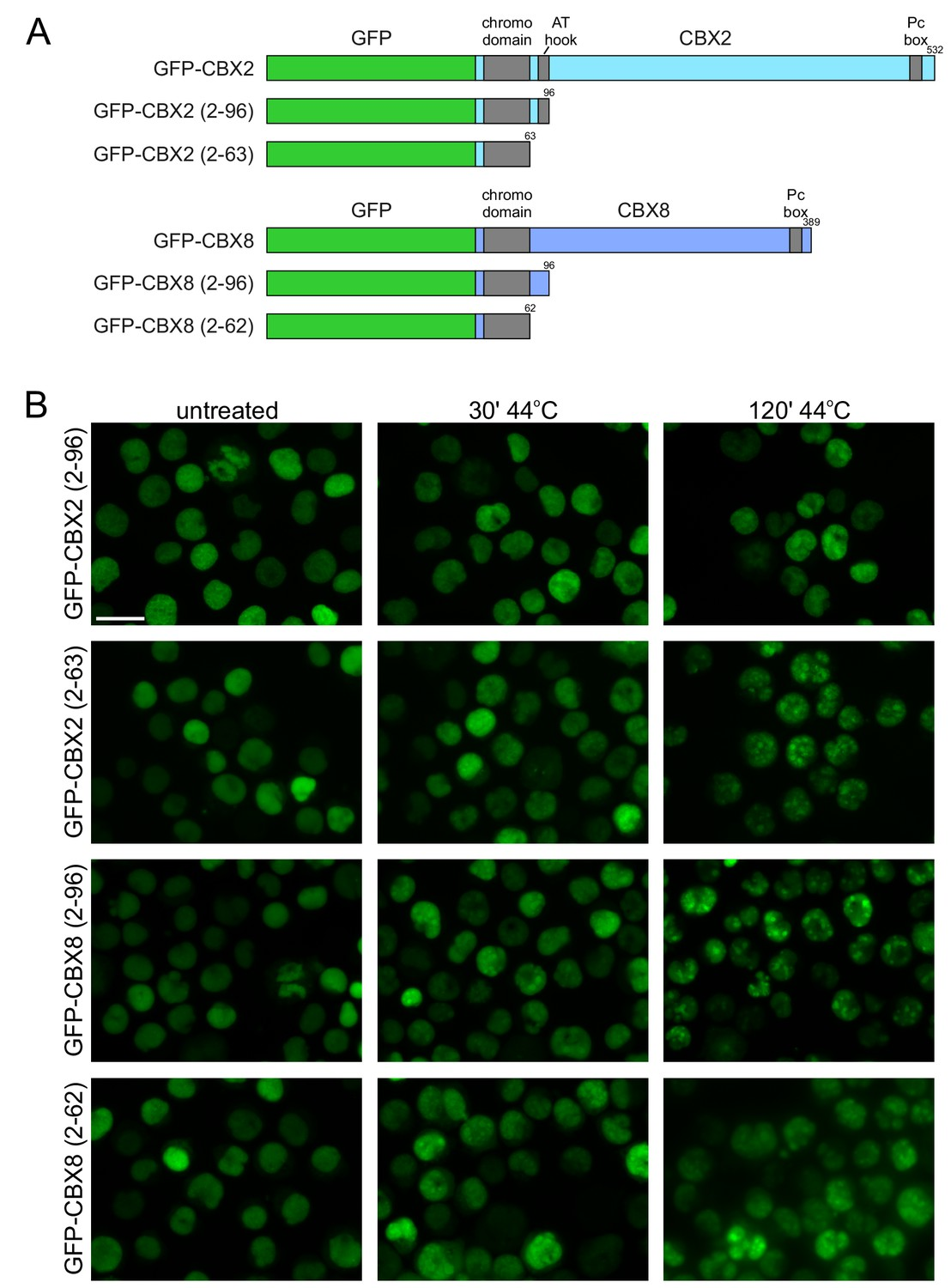 Protein quality control in the nucleolus safeguards recovery