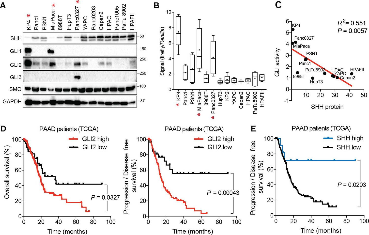 Transcriptional control of subtype switching ensures