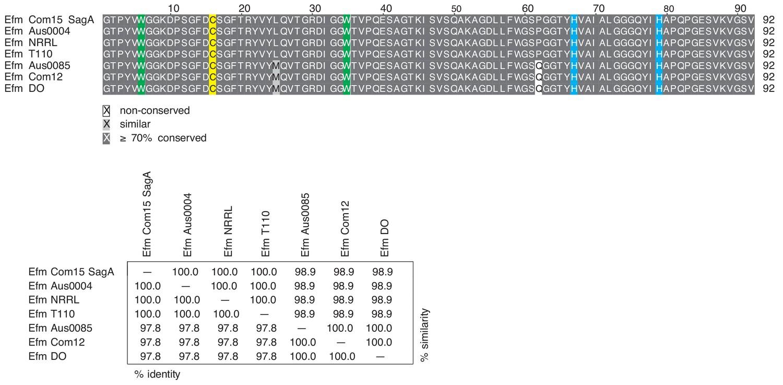 Enterococcus faecium secreted antigen A generates