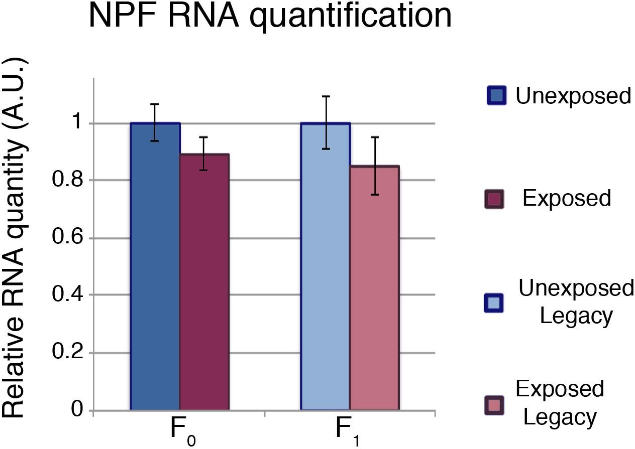 Transgenerational inheritance of ethanol preference is