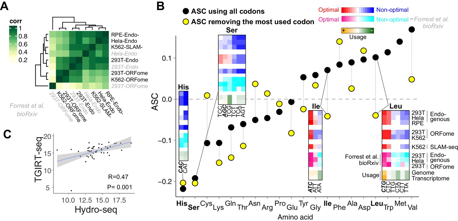Translation affects mRNA stability in a codon-dependent manner in