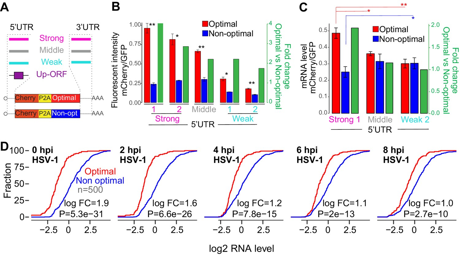 Translation affects mRNA stability in a codon-dependent