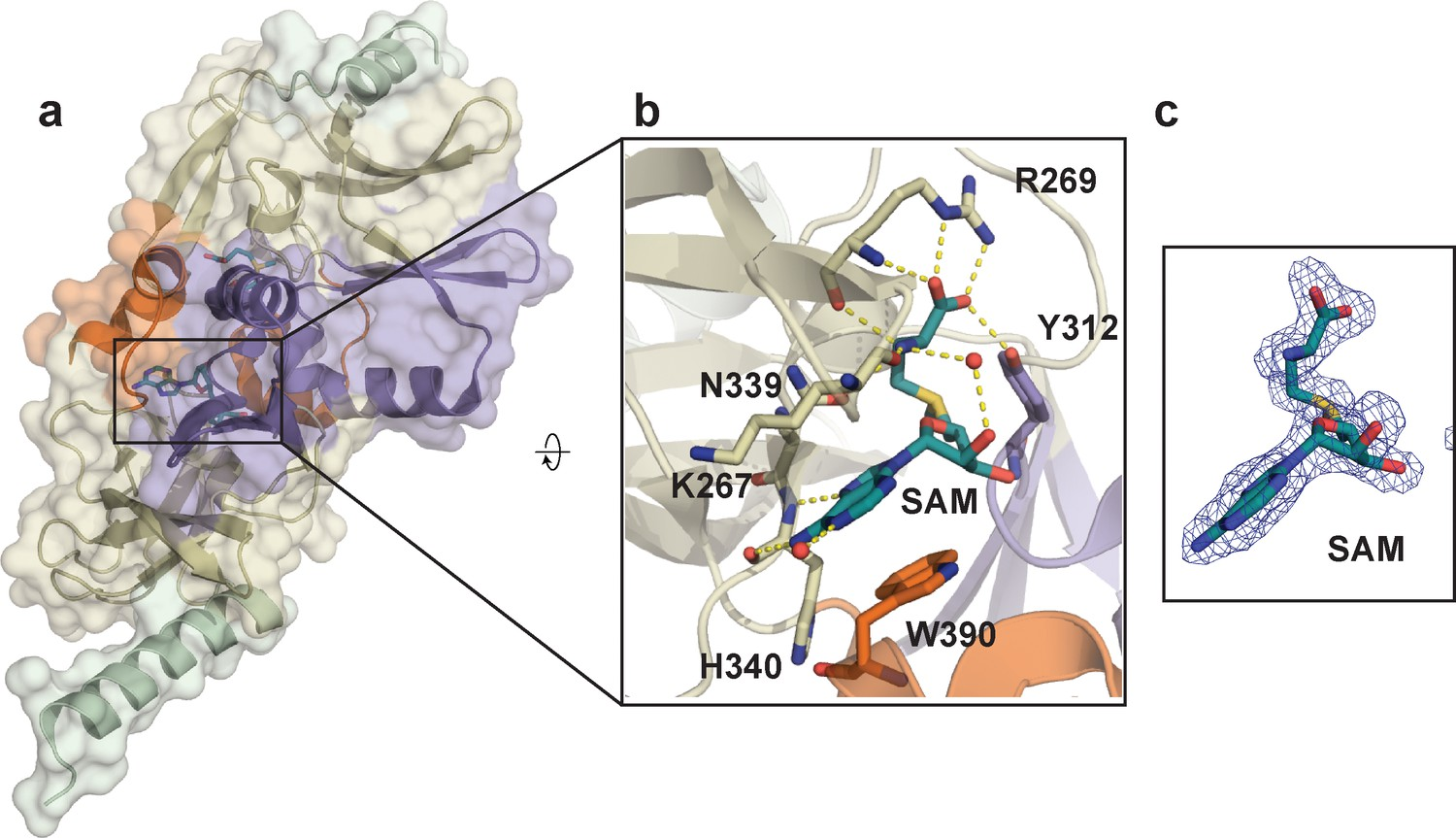 The dynamic conformational landscape of the protein