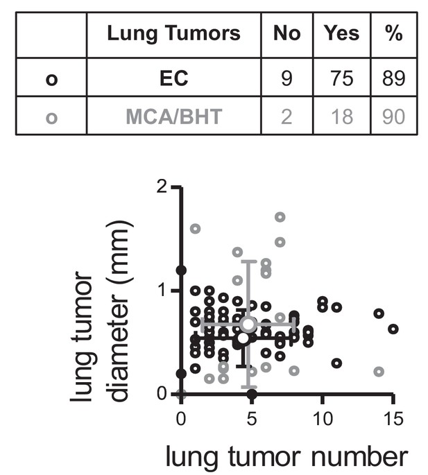Figures And Data In Club Cells Form Lung Adenocarcinomas