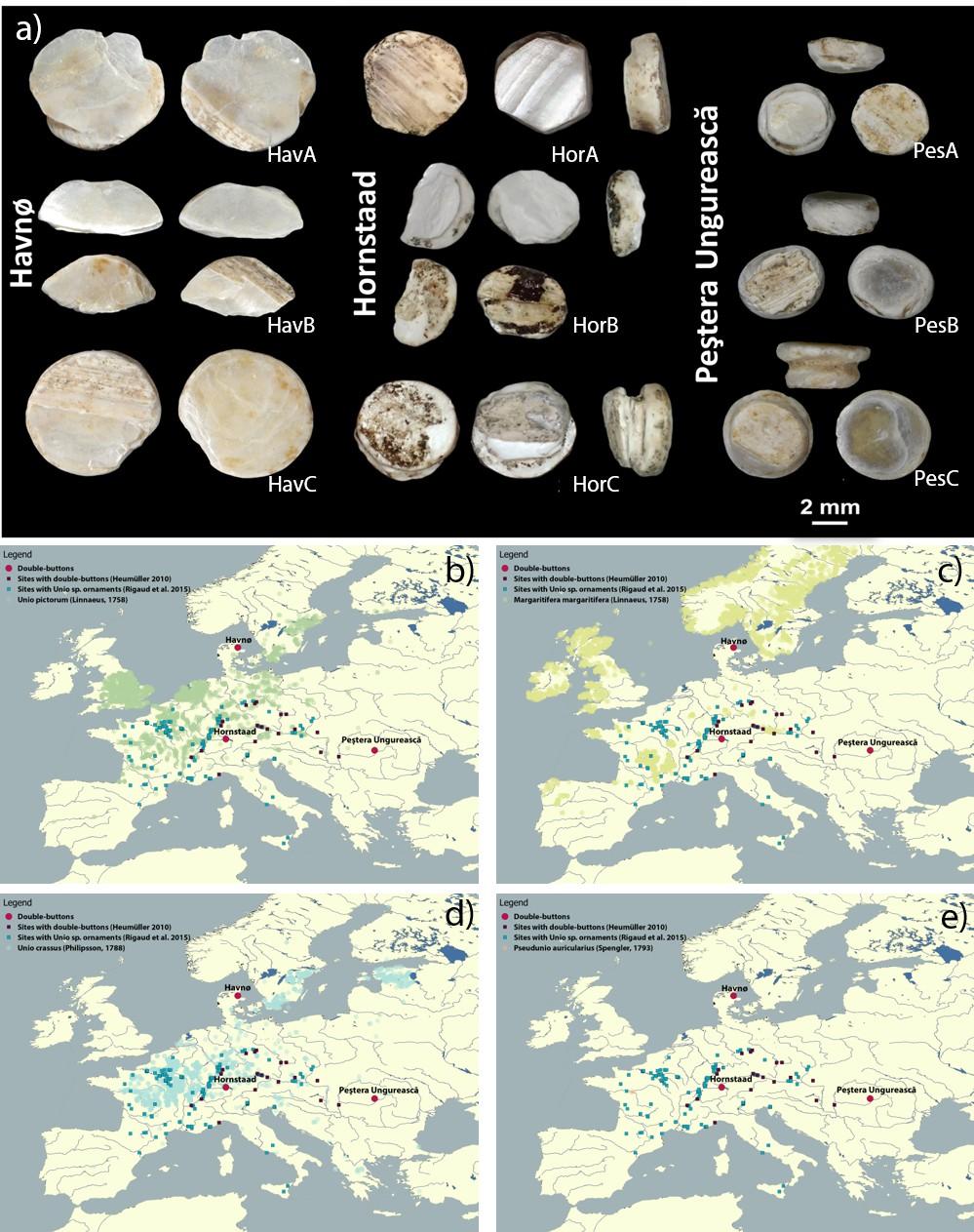 Palaeoshellomics' reveals the use of freshwater mother-of