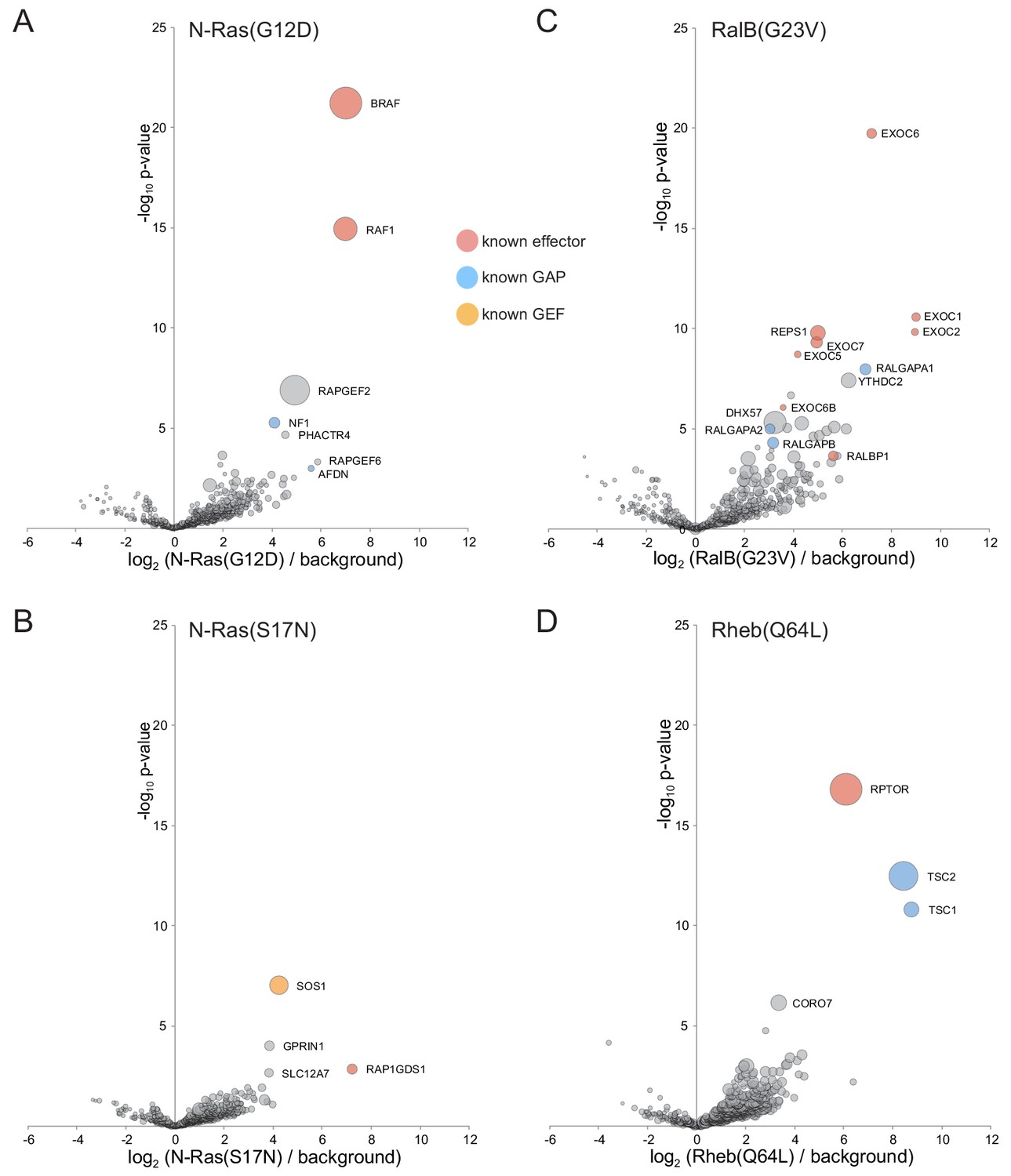 In vivo identification of GTPase interactors by