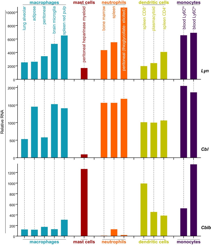 Unique-region phosphorylation targets LynA for rapid